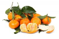When are clementines in season? They are harvested from late October to February, and are in stores by spring.