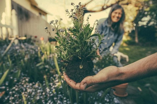 Here are some useful and quick gardening tips to make your gardening hobby fun, productive and rewarding.